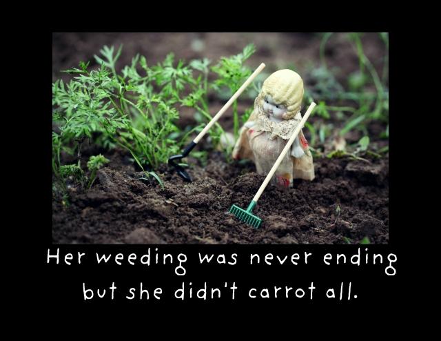 she didn't carrot all card crop